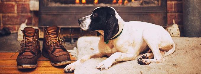 О дружбе человека и собаки