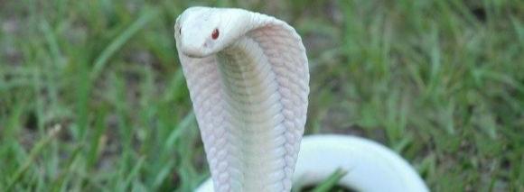 Когда приползает змея