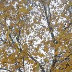 Осенняя сюита