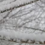 А я пойду гулять по снегу
