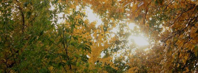 Осень в городе N