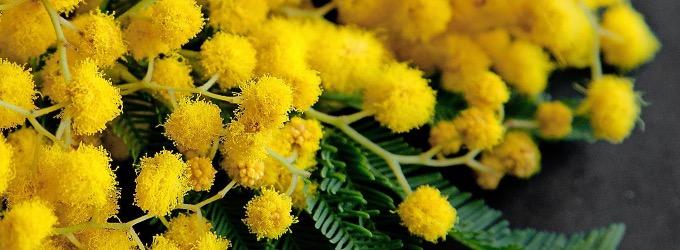 Жёлтые мимозы - стихи о любви, о любви