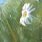 Сорвать цветы в полях