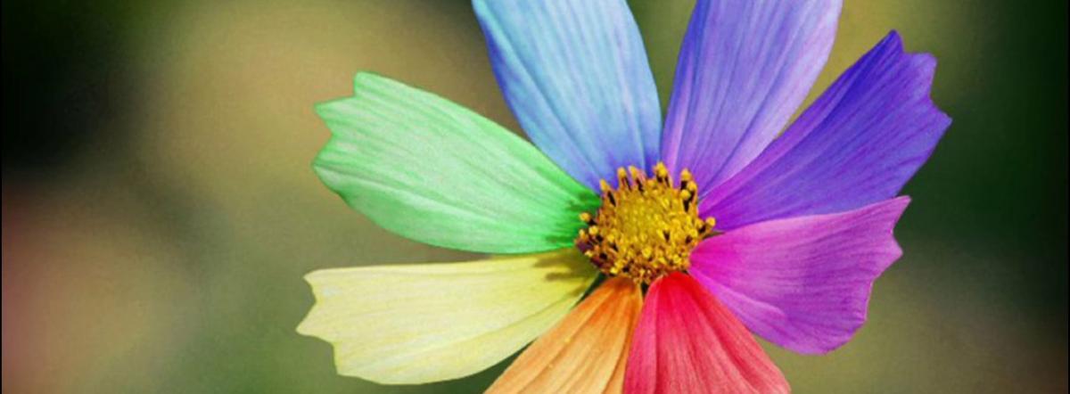 Цветик-семицветик - катаев валентин петрович, сказка