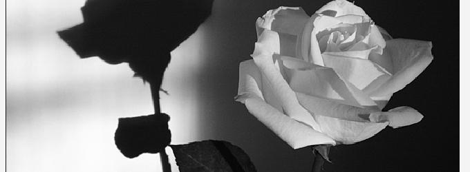 Шлепок и роза