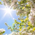 И дышит счастьем небо синее...
