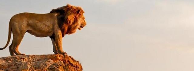 Львиный король