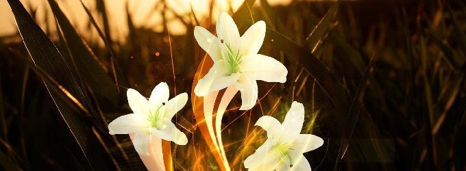 Баллада о лилии