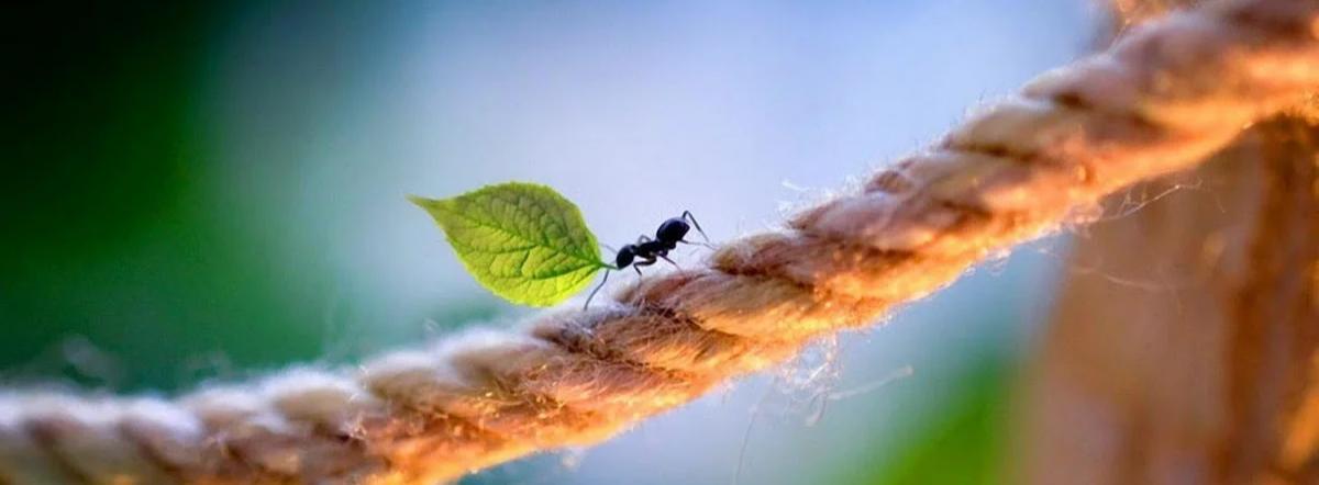 Как муравьишка домой спешил - бианки виталий валентинович, сказка