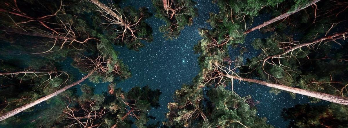 Сосны макушками вымели звёзды