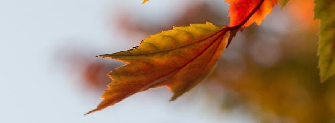 Осень - осень,моистихи,#поэзия,#поэт