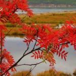 Осенний костёр