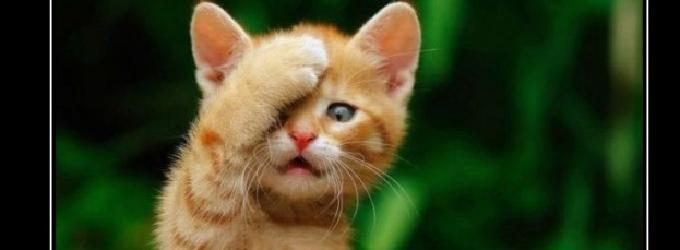 Хроника пикирующего кота - дураки, юмор, коты, кот