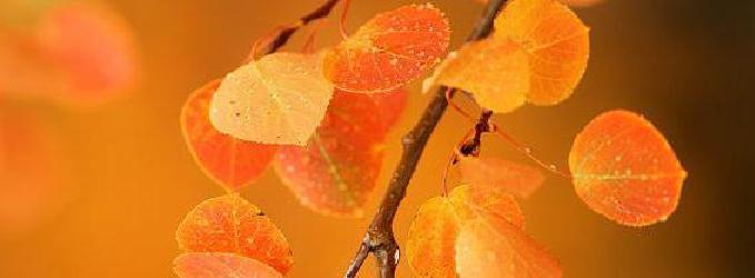 Осеннь, зима.