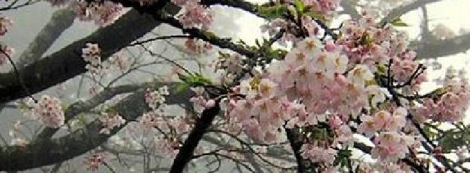 Вчерашнее - галинагвоздецкая,весна,Весна,стихиовесне