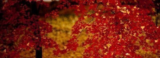 Деревце - осень