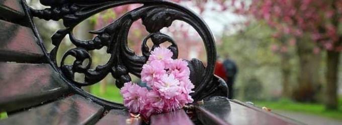 Цветёт в садах - горе, весна, боль