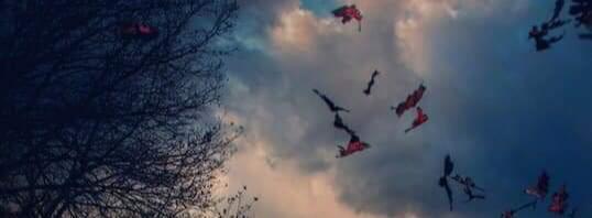 Пролетали журавли