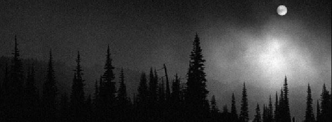 Безмолвный призрак затаившийся в лесу