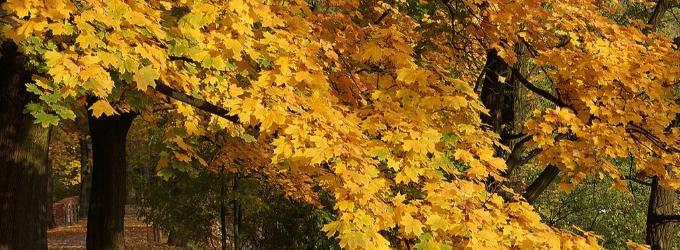 Осень-мать