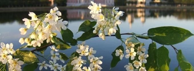 Ещё немного и весна вернется