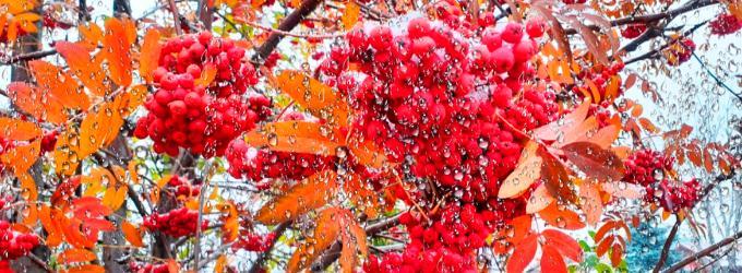 Осенняя хандра ворвалась в город