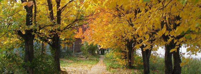 Опали листья в сентябре