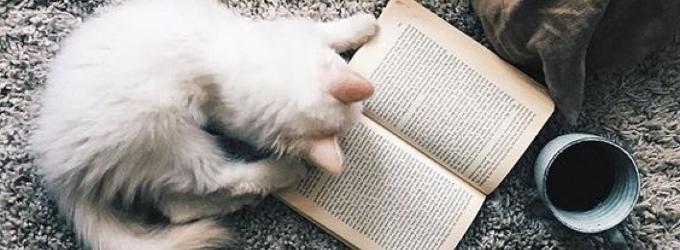 Книга, кофе и кот