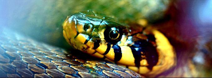 Змея и турист.
