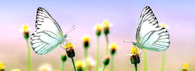 Порхают бабочки по саду...