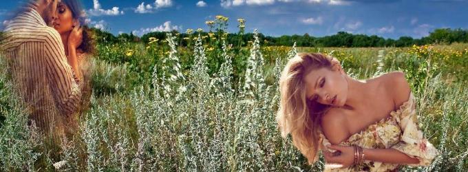 Горчит полынь-трава...