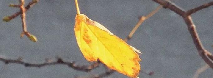 Осень холодным ветром вступила в свои права