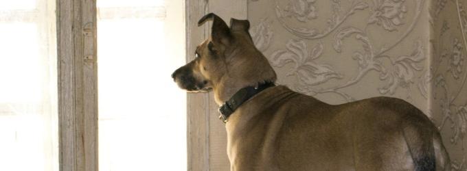 Утро в приюте - приют, любимаясобака, собаки, животные, о любви