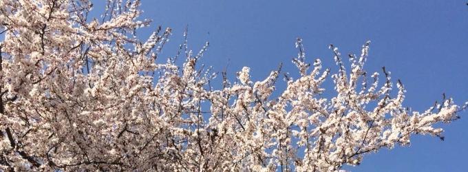 Весна - Философия, жизньфилософия, о жизни, весна, веснадцать