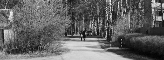 Кони - кони, поэзия, о жизни