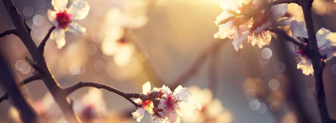 Сны Весны