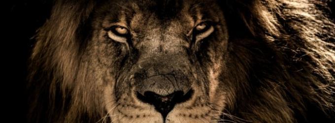 Зверь - зверь, стихиожизни, животные, лирическиестихи