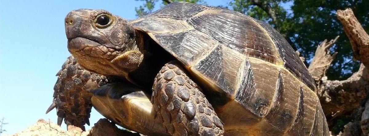 Черепаха - чуковский корней иванович, стихи о животных, сказка