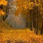 Ещё стояла осень
