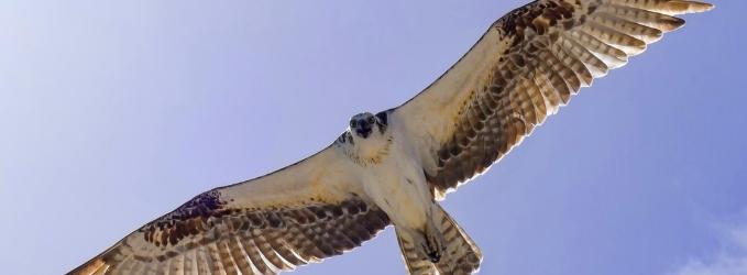 Я птица