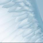Любви моей белые крылья