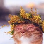 Кот в розовых очках