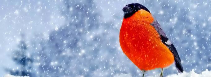 сезон зимы