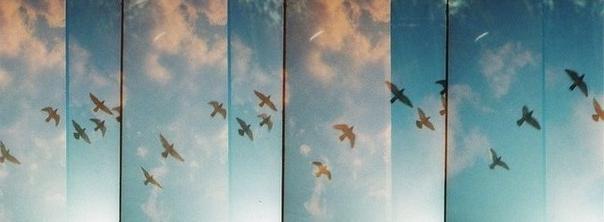 Птицы в сердце