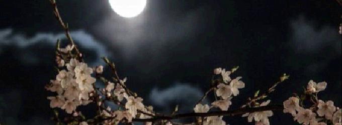 Ночь тиха необычайно