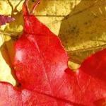Осень крадётся