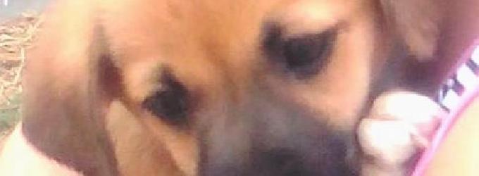Собачье