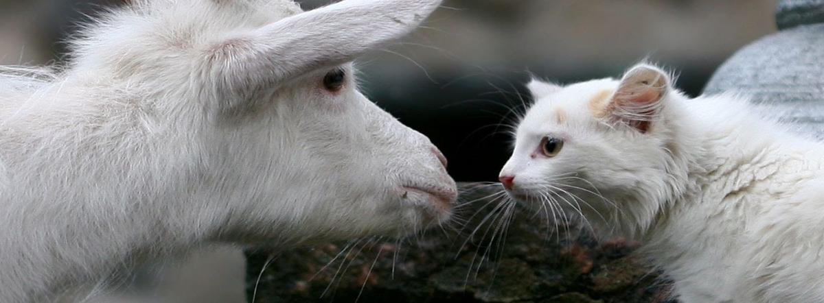 Котик и козлик