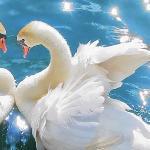 Не стреляйте в белых лебедей краткое содержание