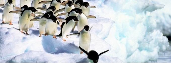 Про доброго пингвина